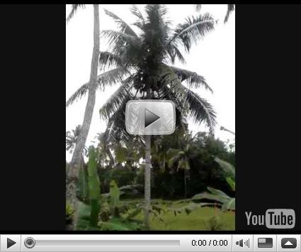 palmbomen in rustig hotelletje in de rijstvelden