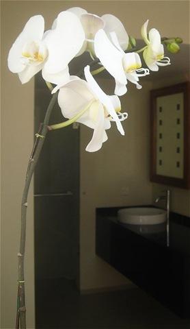 Hotels op Bali hebben orchideeën