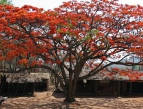 In Bali terug naar Afrika