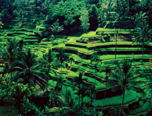 Ubud, Bali Ranked Among the World 10 Friendliest Cities by Conde Nast Traveler