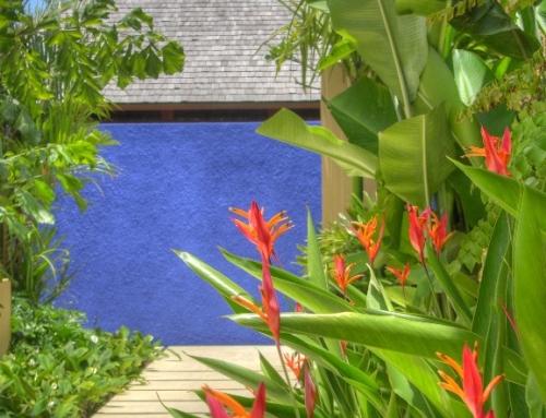 Majorelle Blue in Ubud Bali