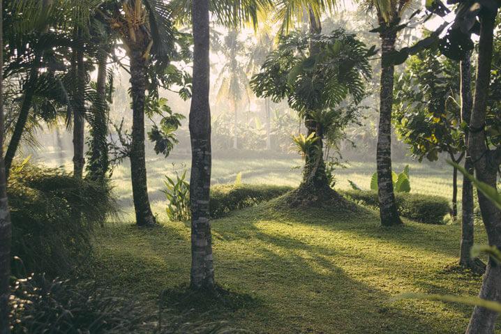 Villa Sabandari - Ubud - Bali - Vision